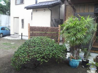 茅ヶ崎代官町の庭